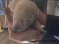 Eine handvoll Hund 4/5