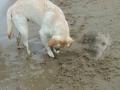 Sand Wars 1/6