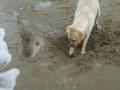 Sand Wars 3/6