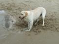 Sand Wars 4/6