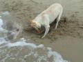 Sand Wars 5/6