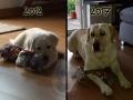 Bailey 2012... und 2017 - 4/5