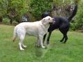 Baileys Foto-Lovestory 2/7