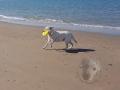 Am Strand von Breskens ..4/8..