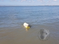sAm Strand von Breskens ..6/8..