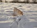 Ball! Schnee! Ball! Schnee! - 5 / 10