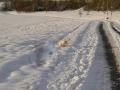 Ball! Schnee! Ball! Schnee! - 8 / 10