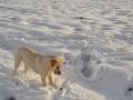 Ball! Schnee! Ball! Schnee! - 9 / 10