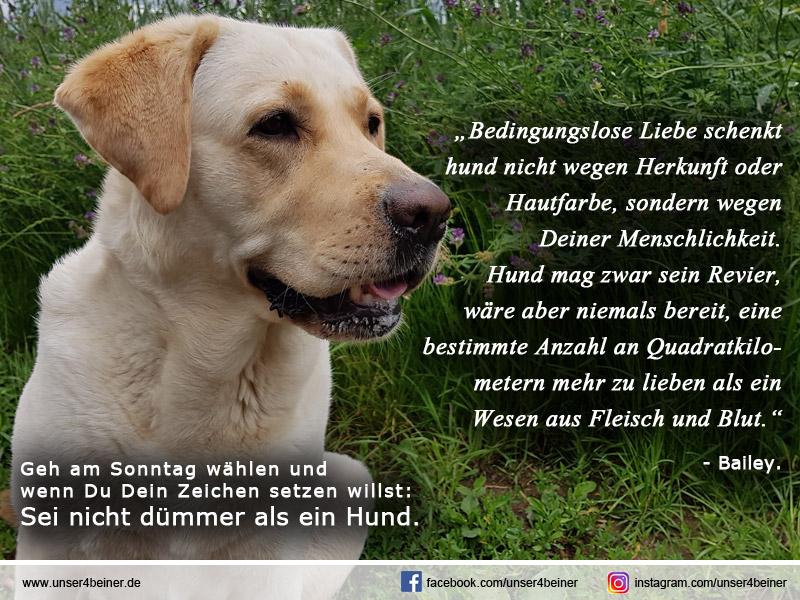 Sei nicht dümmer als ein Hund!